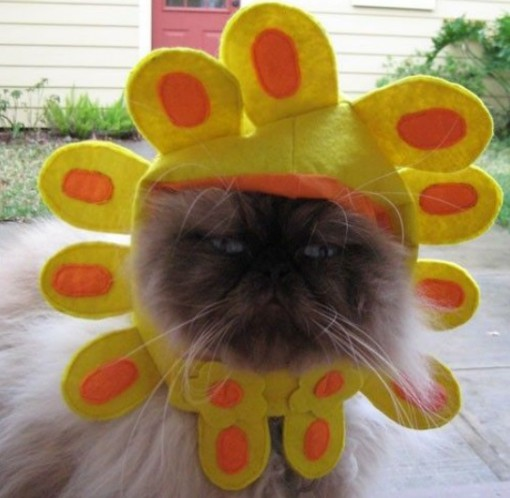 Ten Cat Flowers That Dogs Have Grown For Fun Cats In