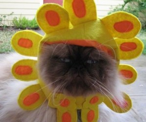 Ten Cat Flowers That Dogs Have Grown for Fun (Cats in Flower Costumes)