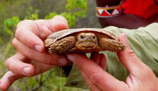 Top 10 Rare and Unusual Turtles and Tortoises