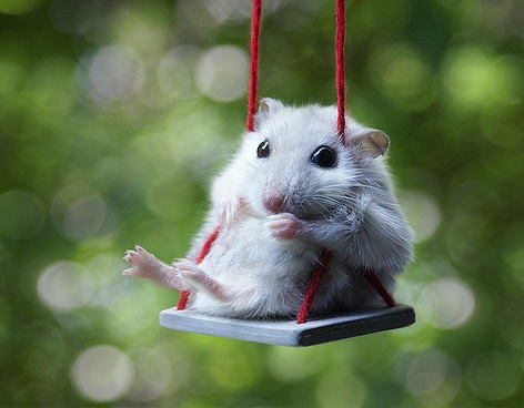 Top 10 Images of Animals on Swings