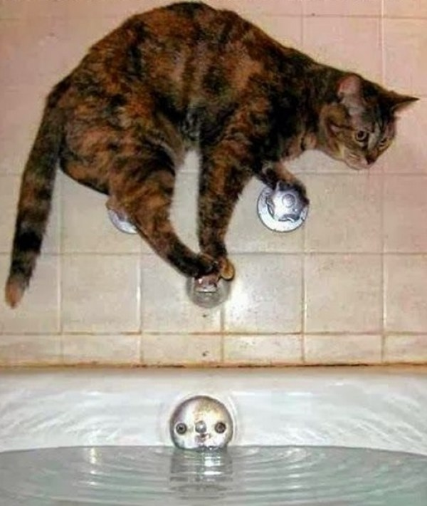 Top 10 Images of Cats That will Regret What They Do