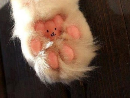 Top 10 Funny Images of Cats Paws