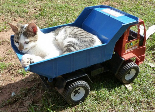 Top 10 Images of Cats in Toy Vehicles