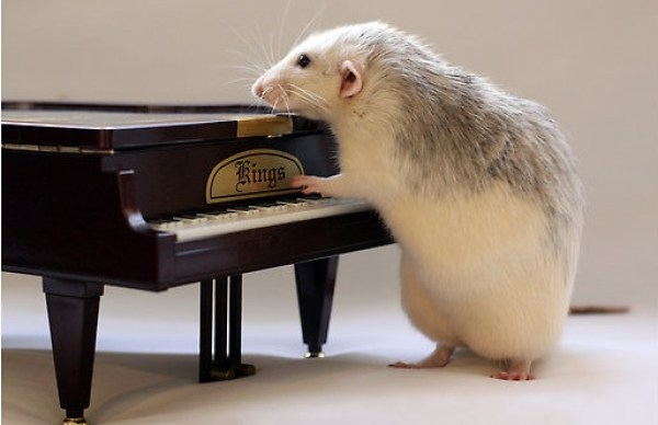 Top 10 Rats Playing Musical Instruments