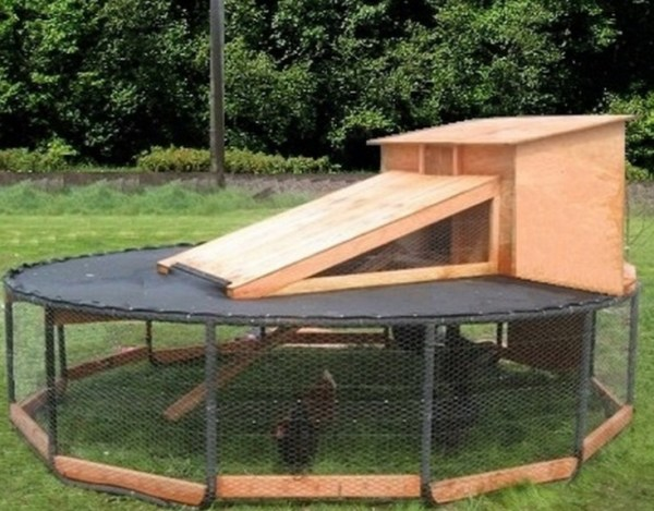 Trampoline Turned Into a Chicken Coop