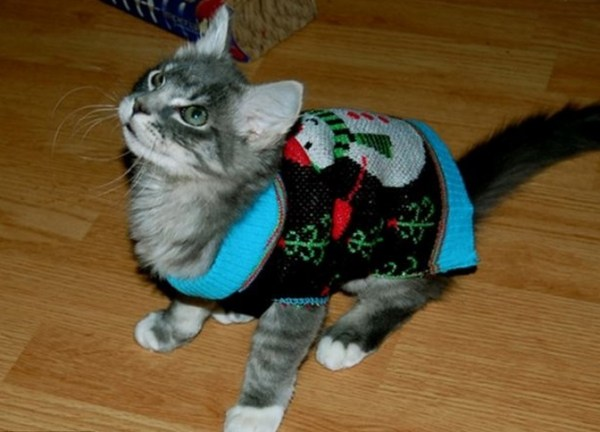 ten cats wearing christmas jumpers us humans wouldn t be seen dead in