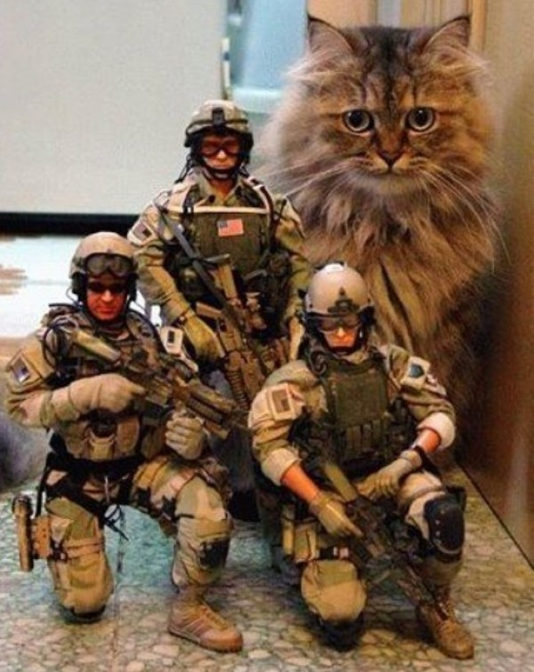 Top 10 Cats and Their Minions