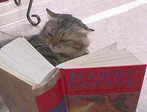 frontline plus cats