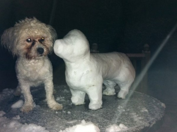 Top 10 Amazing Identical Snow Dogs
