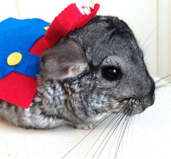 Ten Fun Loving Animals in Super Mario Costumes
