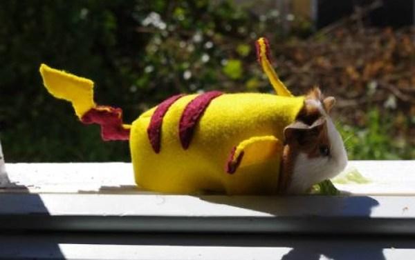Top 10 Best Guinea pigs in Fancy Dress