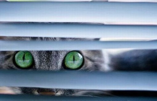 Top 10 Cats Peeking Through Blinds