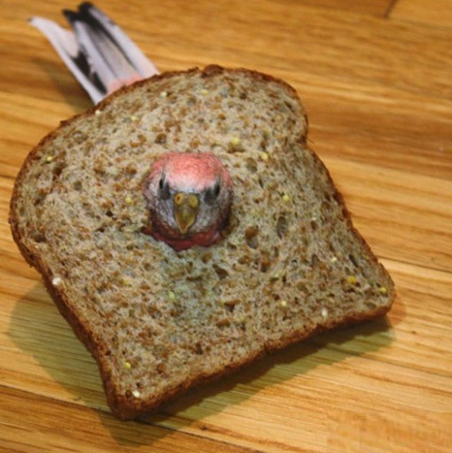 Top 10 Funny Images of Animal Breading