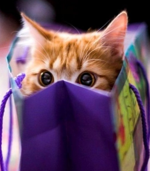 Top 10 Images of Cats In Bags