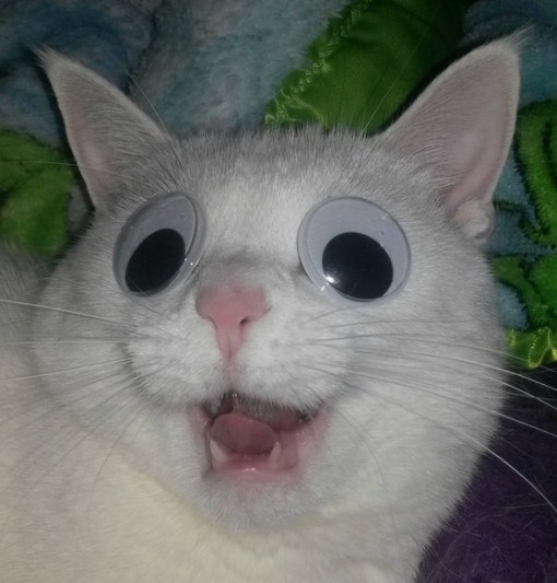 what to do if your cats eye is swollen