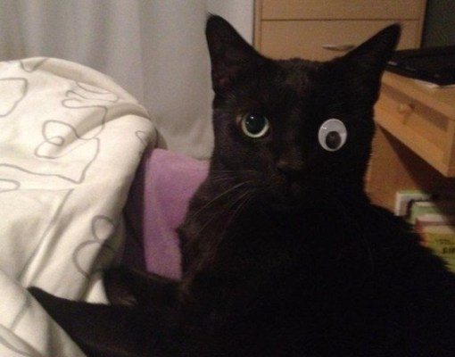 Top 10 Images of Cats With Googly Eyes