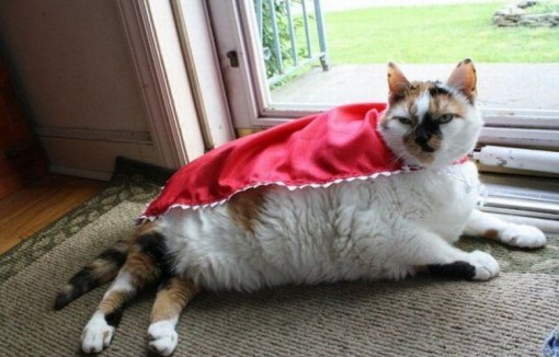 Top 10 Superhero Cats Wearing Capes