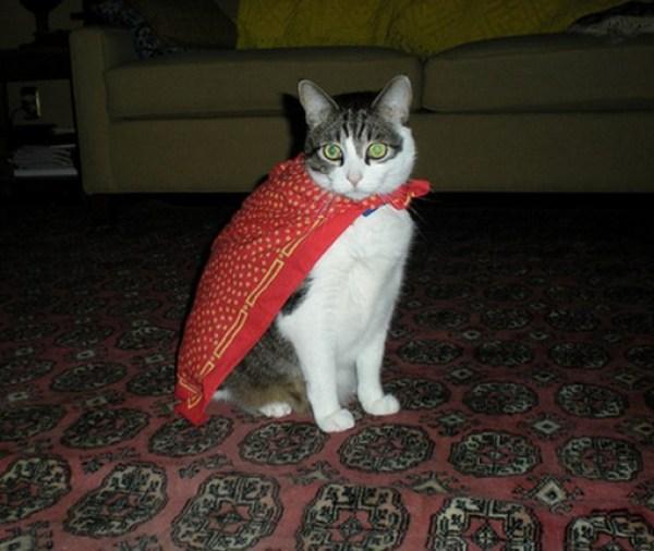 Top 10 Superhero Cats Wearing Capes