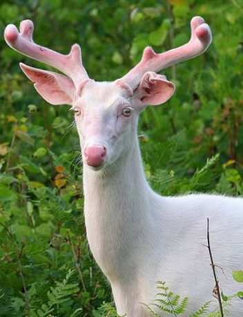 Top 10 Pictures Of The Rarest Albino Animals