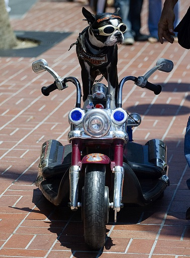 Cute Dog on a Motorcycle