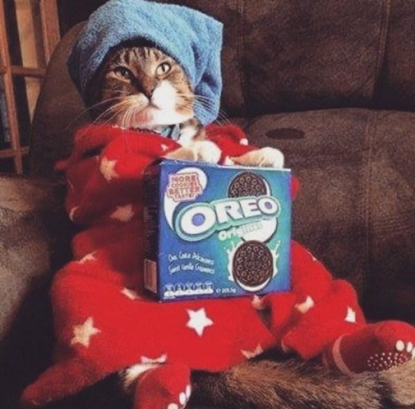 Top 10 Cats Netflix Binge-Watching