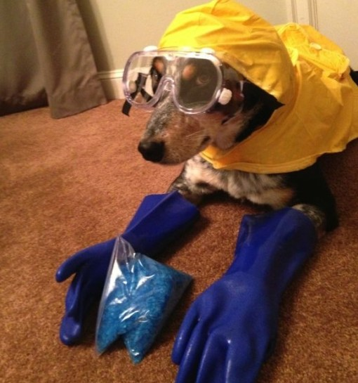 Top 10 Animals in Breaking Bad Costumes