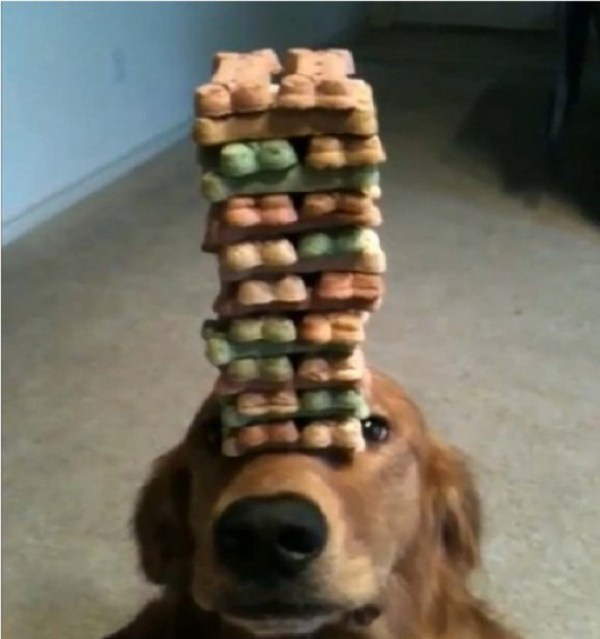 Top 10 Dogs With Too Many Treats
