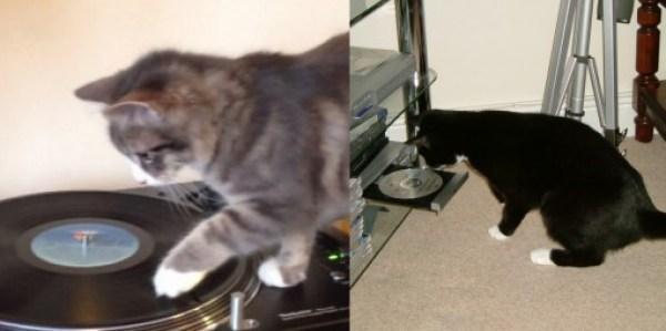 Top 10 Examples of Modern Cat Vs Older Cat