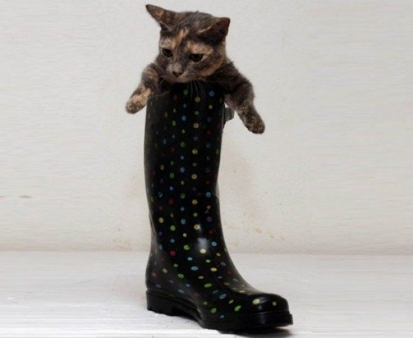 Top 10 Images of One Legged Cats