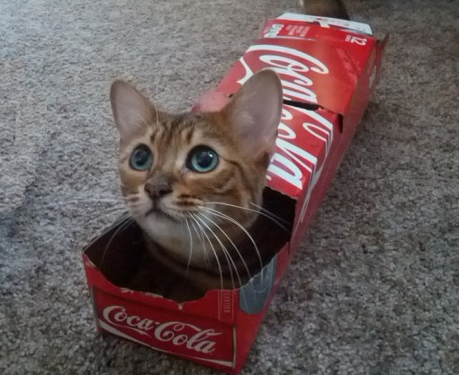 Top 10 Cats in Brand Name Packaging