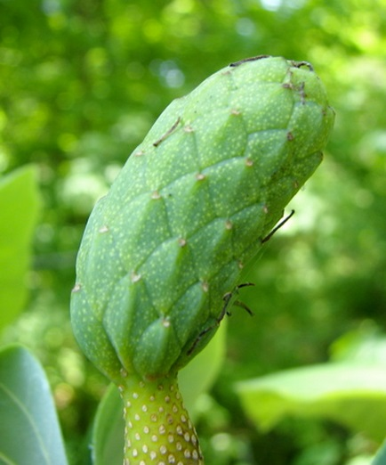 Top 10 Rare and Unusual Cucumbers