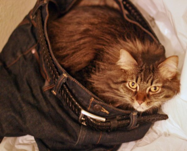 Top 10 Tight Fitting Animals Wearing Jeans