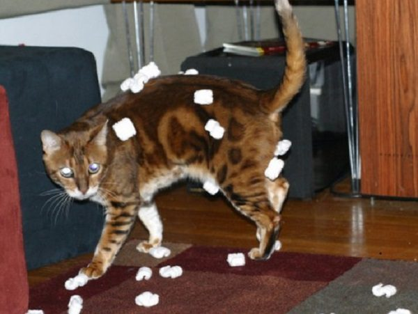 Cat Covered in Packing Peanuts