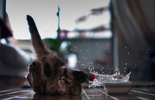 Top 10 Cats and Scary Splashes