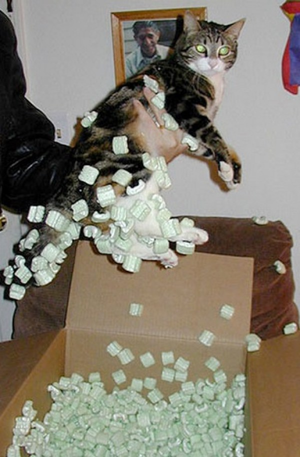 Ten Very Curious Cats Covered in Packing Peanuts