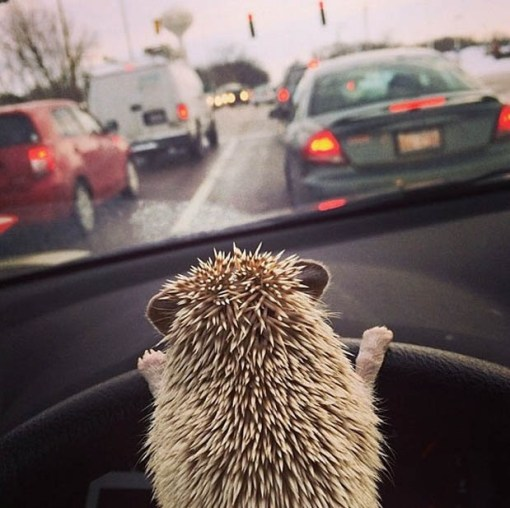 Top 10 Learner Animals Driving Cars
