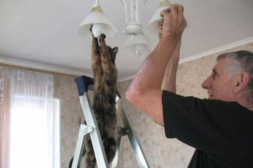 Top 10 Lending a Paw Helpful Cats