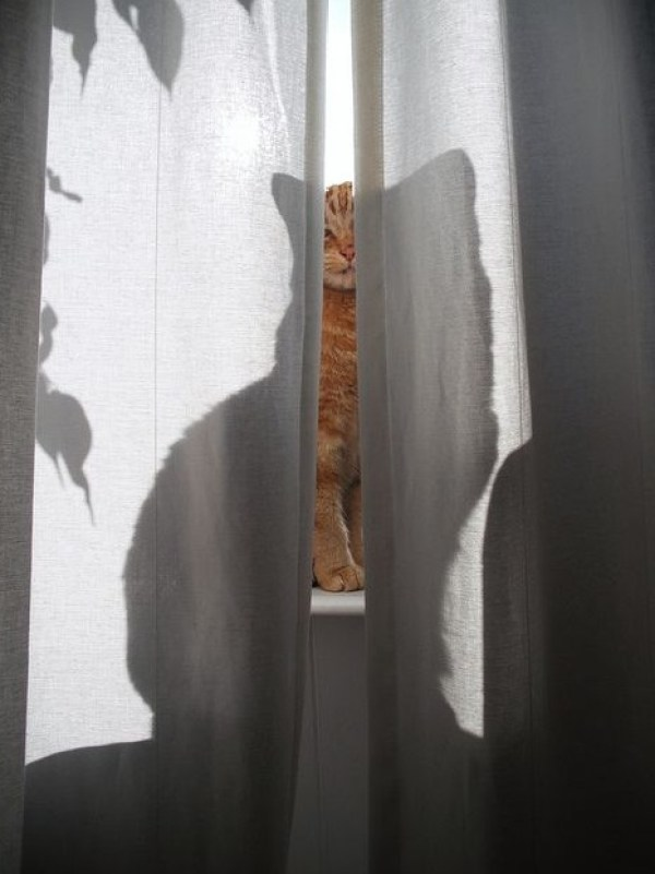 Top 10 Scary and Funny Cat Shadows
