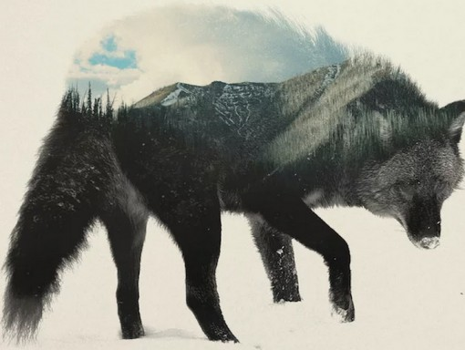 Top 10 Amazing Animal Shaped Landscape Pictures