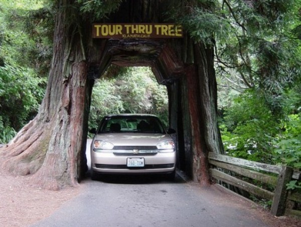 Top 10 Amazing Tunnels Through Trees