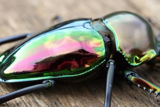 Top 10 Amazing and Unusual Beetles