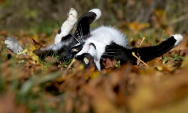 Top 10 Autumn Animals Playing In Leaves