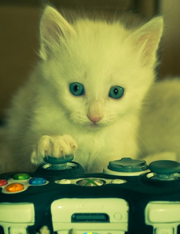 Top 10 Nerdy Xbox Fanboy Cats