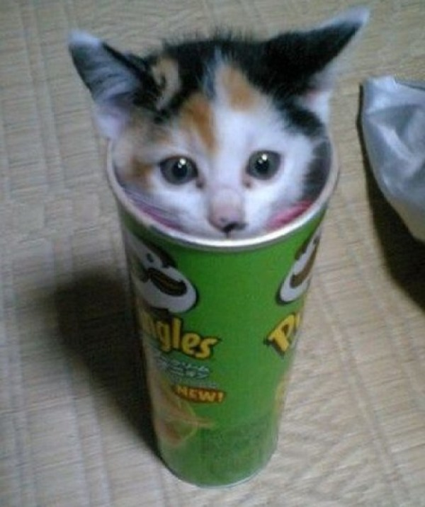 Top 10 Popping Cats In Pringles Tubes