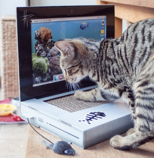 Cat Scratching Laptop
