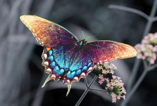 Top 10 Amazing Naturally Rainbow Coloured Animals
