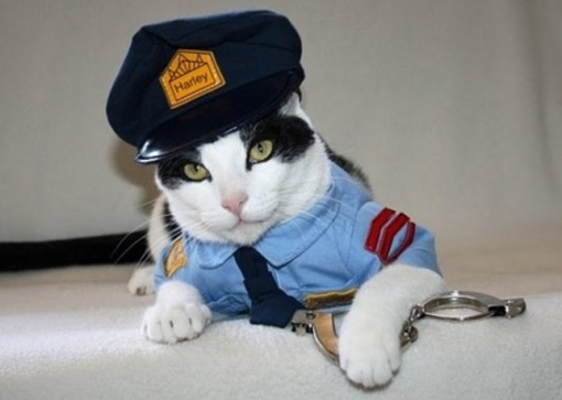 Top 10 Crime Fighting Police Cats