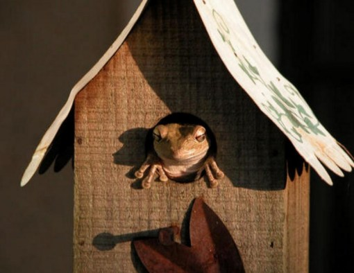 Frog in a Bird House