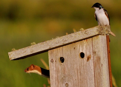 Top 10 Unusual Animals Inside Bird Houses
