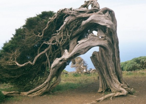Top 10 Amazing and Unusual Trees